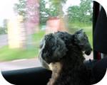 車から外を眺めるパセリ