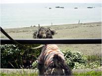 ポプラ、初めて近くで海を見る