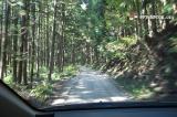 杉林の道はおもしろくない