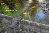 ガードレール上から覗くポプラ