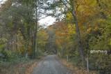 整えられた林道