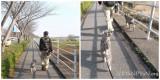 車道と沼の間の歩道