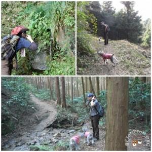 宝篋山 山口コース6
