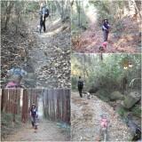 杉林から雑木林
