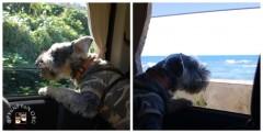 窓から眺める事が好きになったポプラ