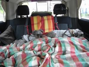 車内のパセ&ポプ