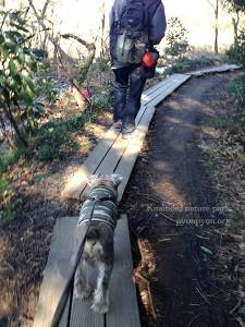 木道を歩きます